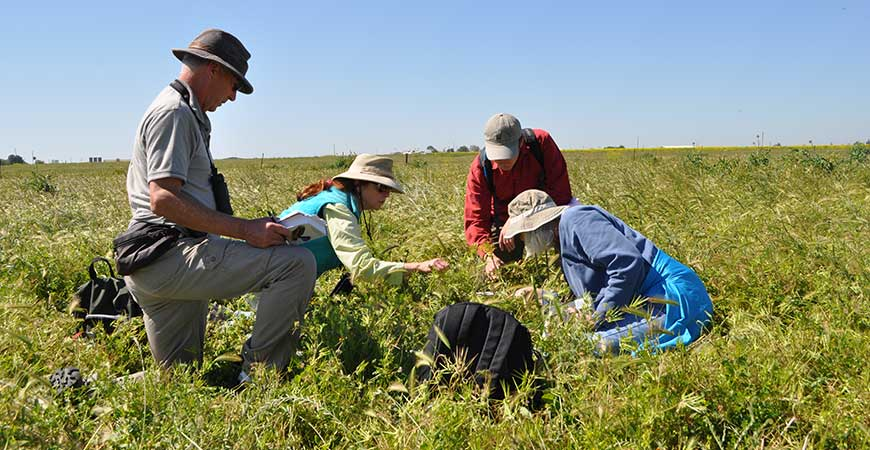 Four participants in the UC California Naturalist Program explore plant diversity on Cunningham Ranch in Merced County.
